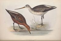 复古小鸟喝水装饰画