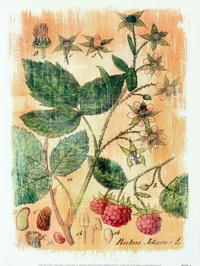 卡通手绘蔬菜客厅装饰画1