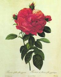 鲜红玫瑰花客厅装饰画
