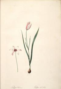 复古粉白花朵装饰画2