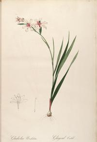 复古粉白花朵装饰画