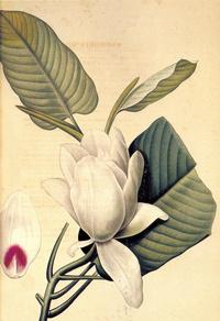 唯美白色花朵复古装饰画