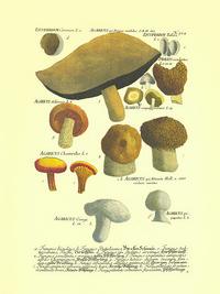 卡通蘑菇客厅装饰画3