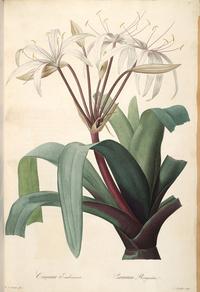 复古白色鲜花装饰画5