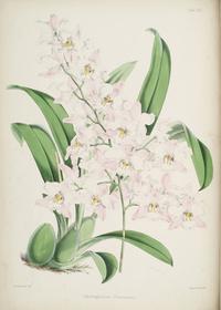 粉白花朵装饰画2