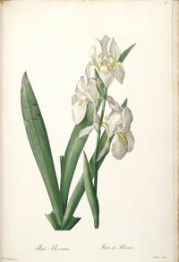复古白色鲜花装饰画4