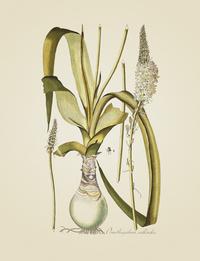 复古绿叶白花装饰画