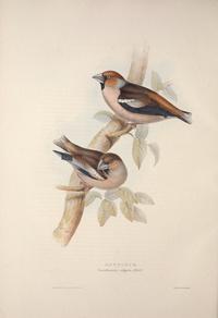 复古精美小鸟装饰画