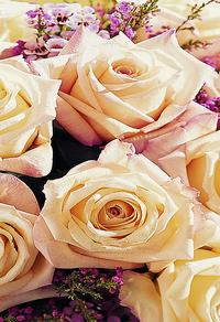 玫瑰花束装饰画2