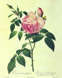 手绘带刺玫瑰花客厅装饰画
