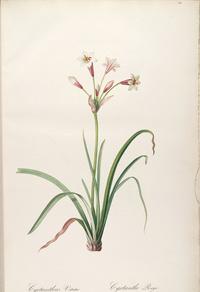 美丽粉白花朵装饰画
