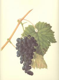 葡萄复古装饰画