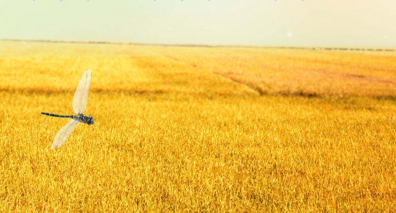 秋天的田野素材